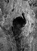 imagette, les bois tourmentés 2